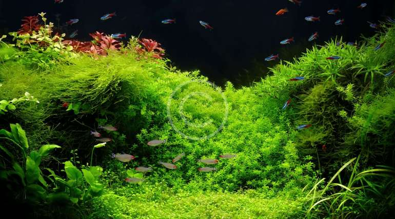 Aquascape Accessories