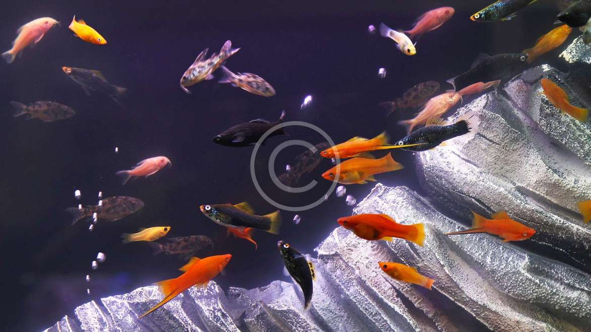Retails for Aquarium Needs & Accessories