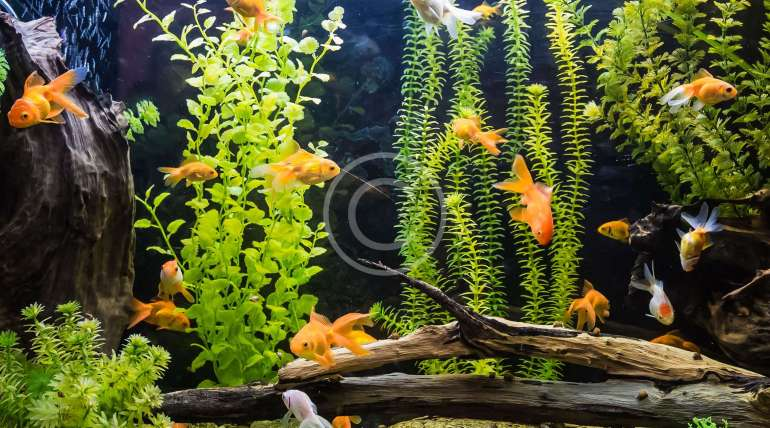 How To Acclimate Tropical Fish To Your Tank