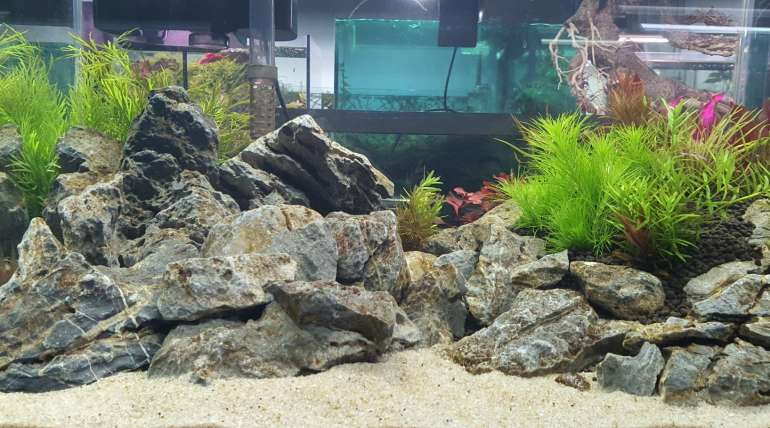 Design & Build New Setup Aquarium with Desired Setup
